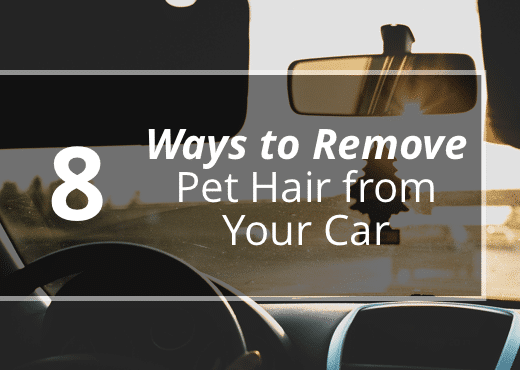 remove pet hair from your car